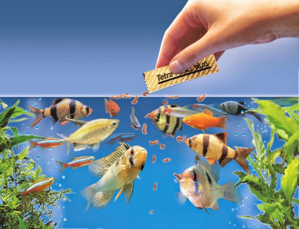Type Of Aquarium Fish Food